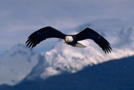 http://elzin.files.wordpress.com/2009/05/eagle-wings_869.jpg?w=450&h=302