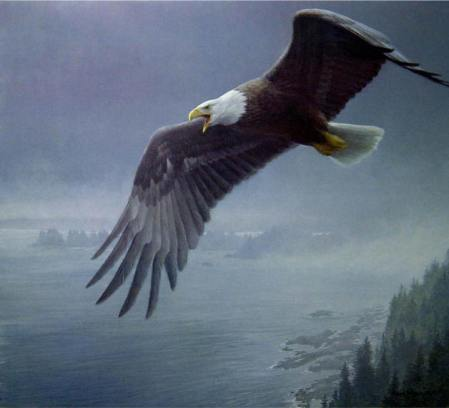 on-the-wing-bald-eagle